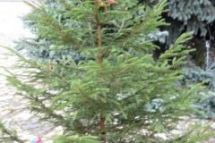 20191129_zdobeni_stromku_20